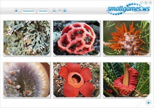 Почемучки и Отчевочки. Растения и грибы
